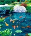 Оборудование для водоемов и прудов